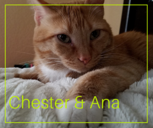 chester-and-ana