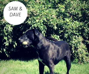 sam-and-dave