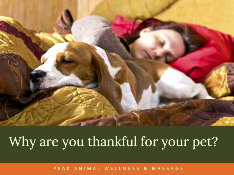 Why are You Thankful for Your Pet - A Thanksgiving Special