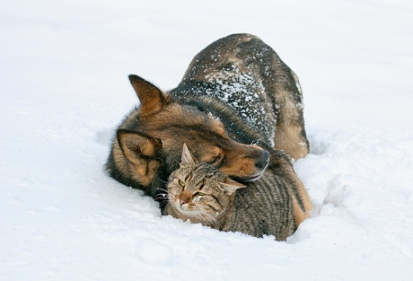 4 Ways to Prepare Your Pet for Winter