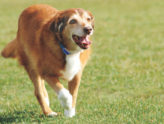 Activity and Your Aging Pet