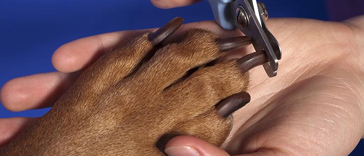 fear free nail trim