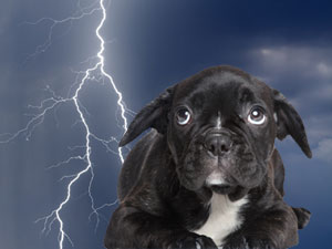 storm phobia for dog