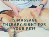 animal masage