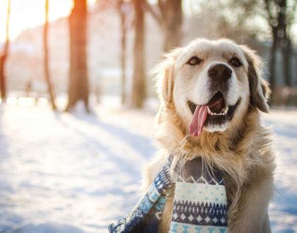 winter pet support
