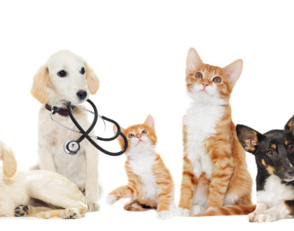 pet wellness team
